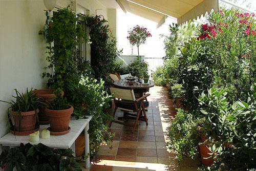 озеленение летней террасы