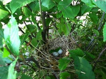 живой забор для птиц