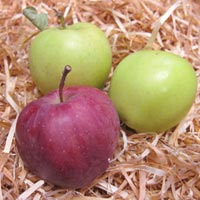 хранение яблок в домашних условиях