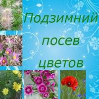 цветы для подзимнего посева