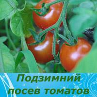 посев помидоров под зиму