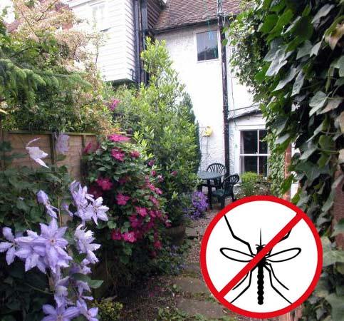 защита от комаров на даче