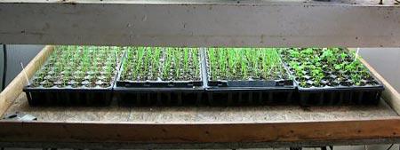 влияние света на растения и спектр света для растений