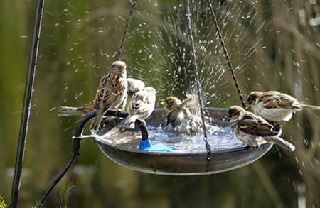 поилки для птиц своими руками